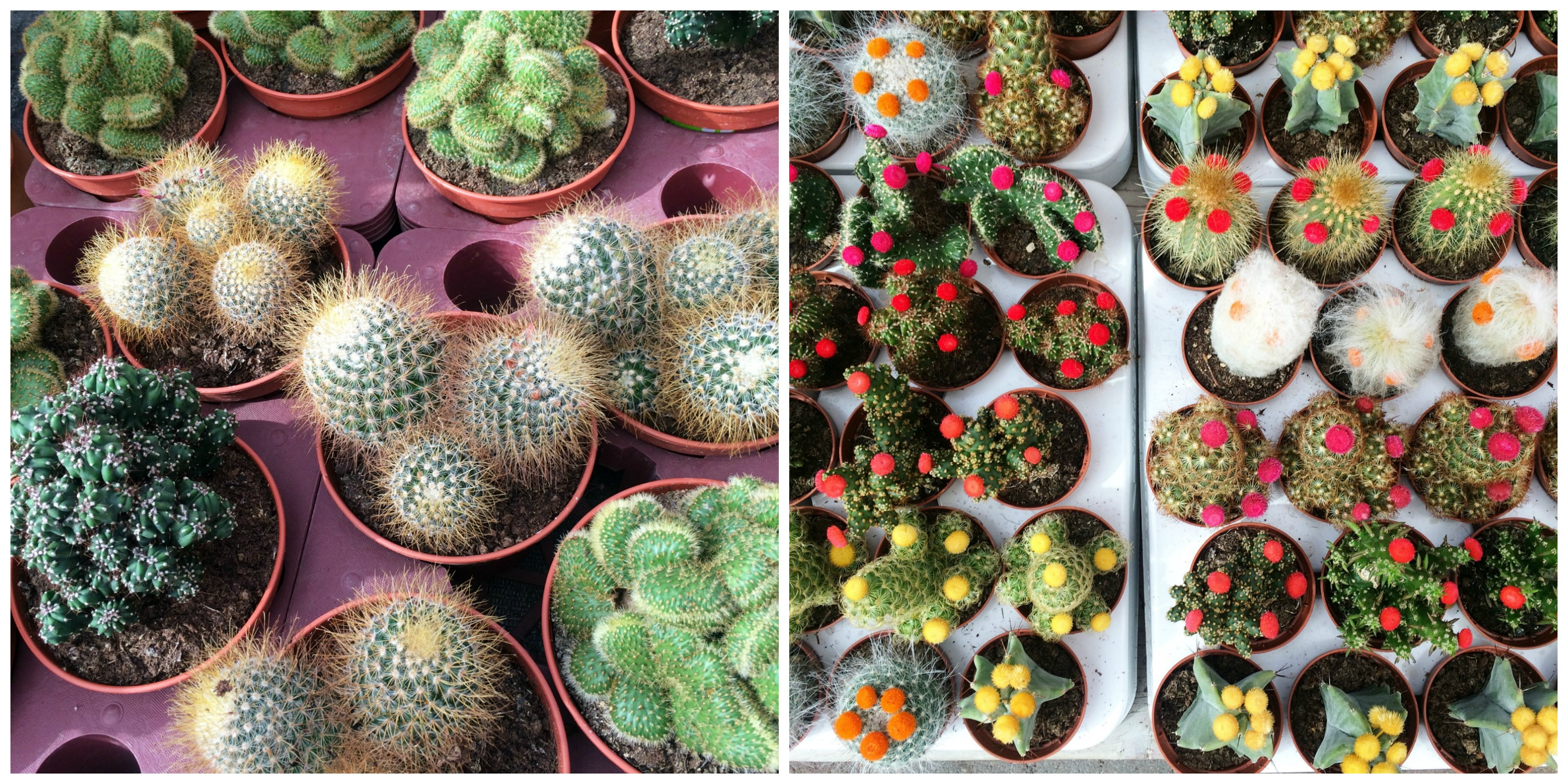 April recap: garden center cactus - http://weirdatheart.com/april-recap/
