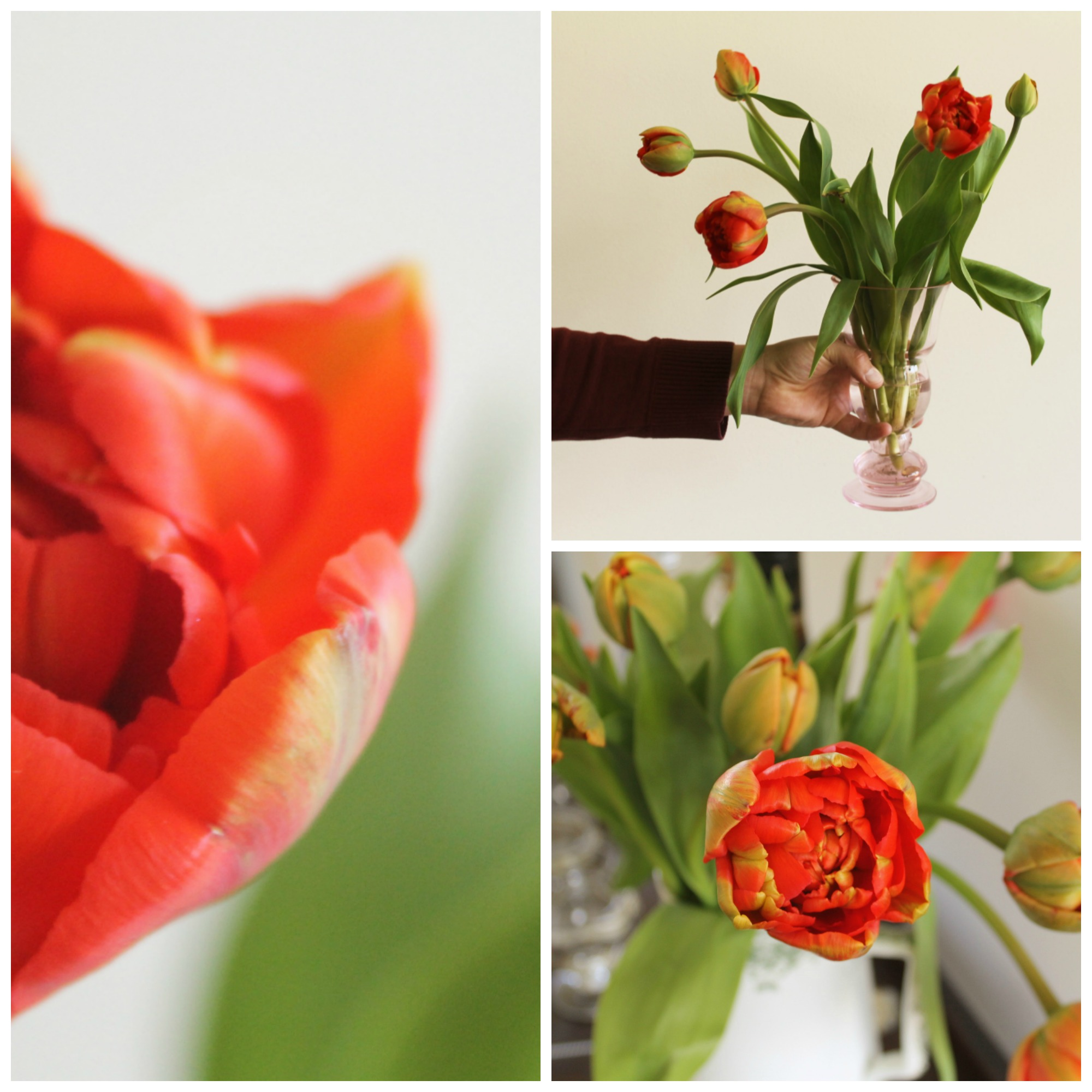 April recap: Kingsday orange tulips - http://weirdatheart.com/april-recap/