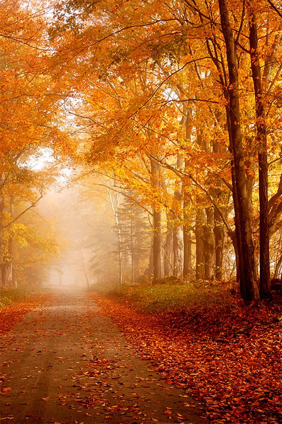 TV shows to watch this fall - fall foliage